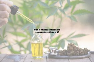 What is meant by cannabis and components available in it?